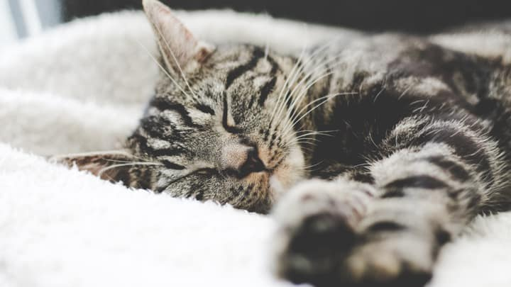 Clean up Your Sleep Hygiene, Improve your Health
